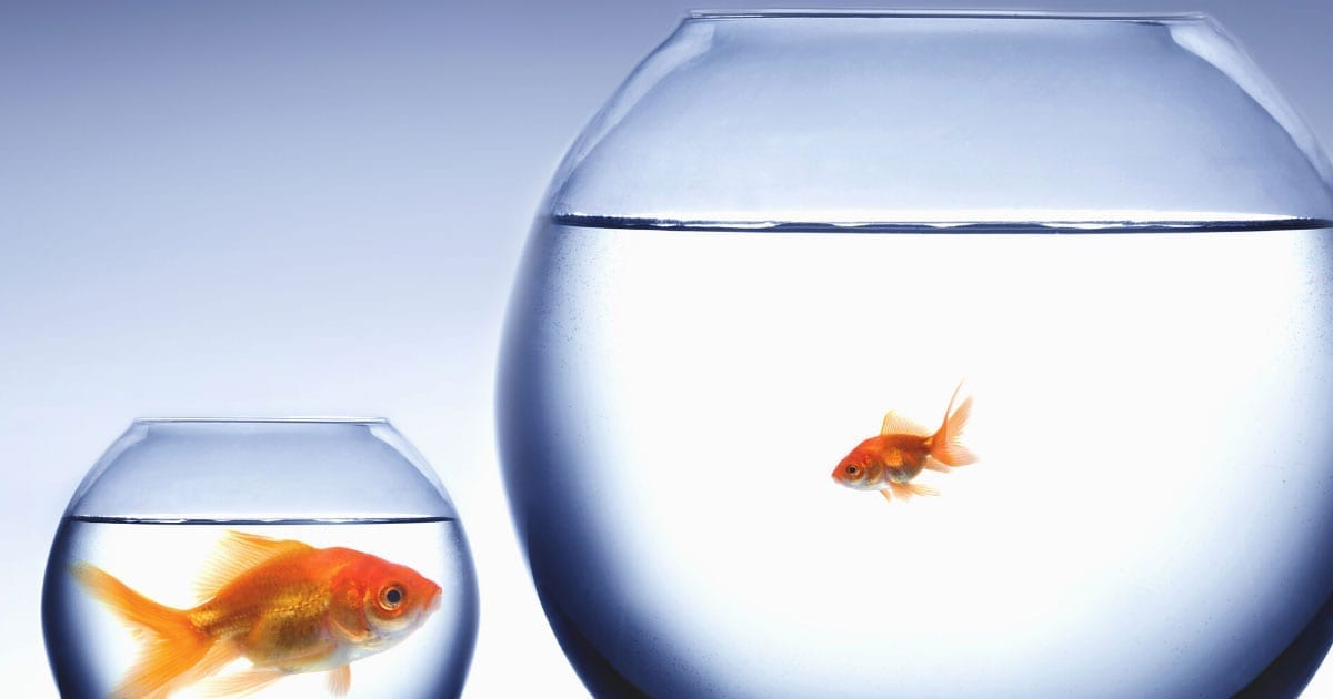 Are you a little fish in a big pond? Benefits of a small, local bank